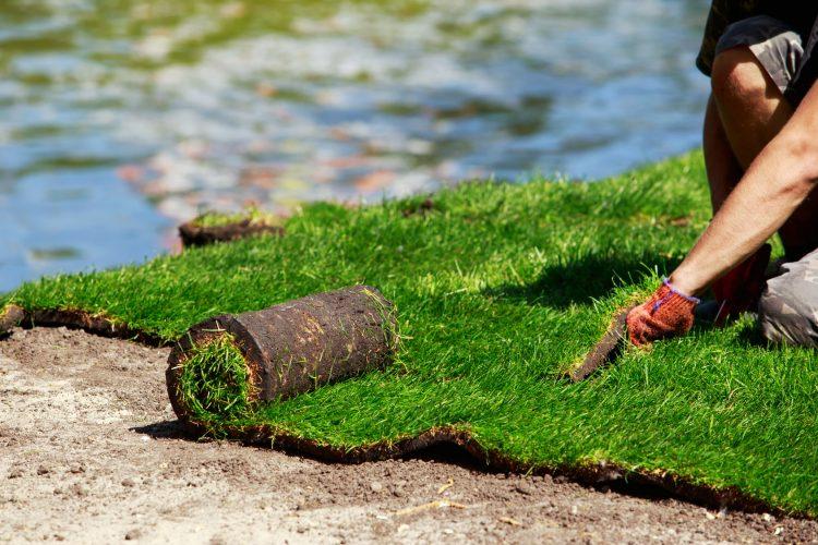 Sposoby na trawnik